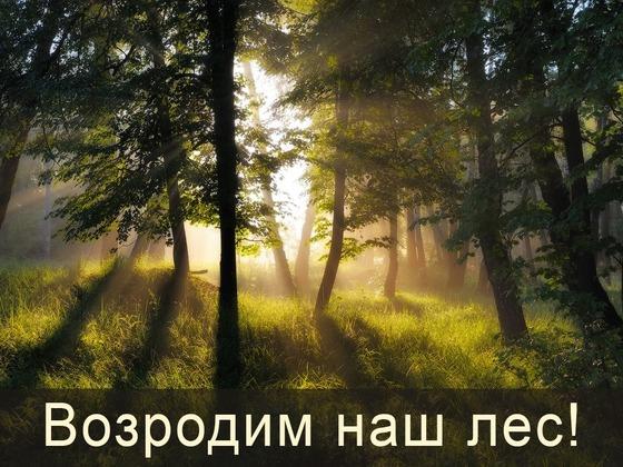 Область бережет лес