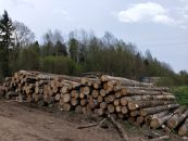 """Лесозаготовка стала """"камнем преткновения"""" для автолюбителей"""