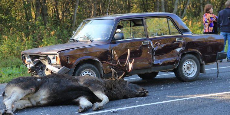Ответственность за гибель диких животных в результате столкновения с транспортным средством