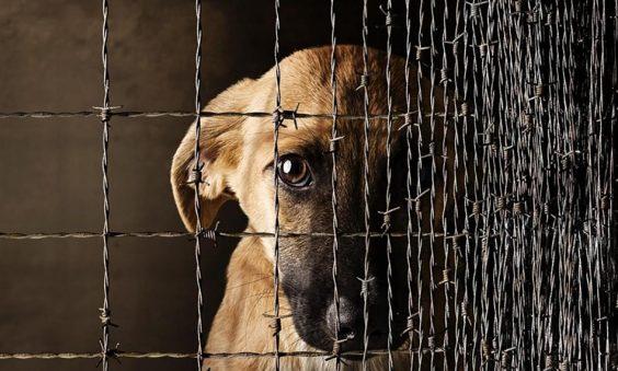 Урегулированы вопросы обращения с животными