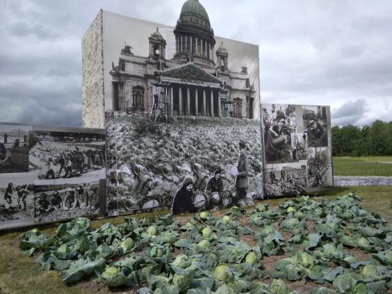 На «Дне поля» воссоздали блокадные огороды