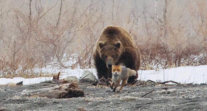 """Медвежий"" рейд"