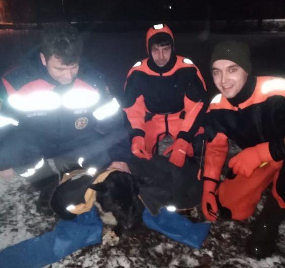 В Новой Ладоге из канала спасли пса
