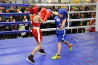 В «CUBUSе»  сразились областные боксёры