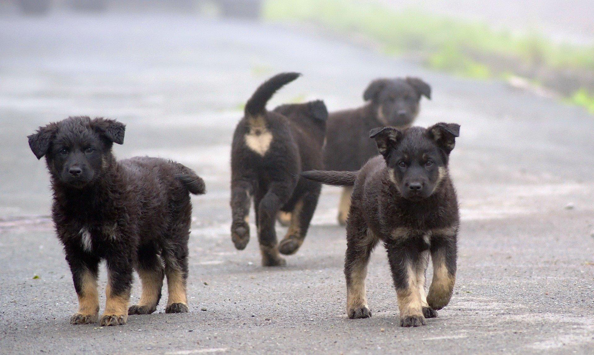 Более 40 миллионов рублей на помощь бездомным животным