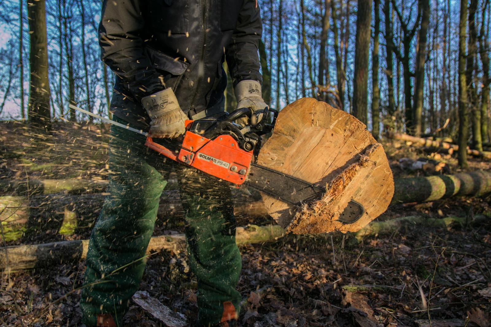 Борьба с незаконной вырубкой леса идёт успешно