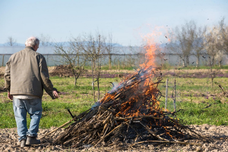 МЧС разрешит сжигать на даче сухую траву