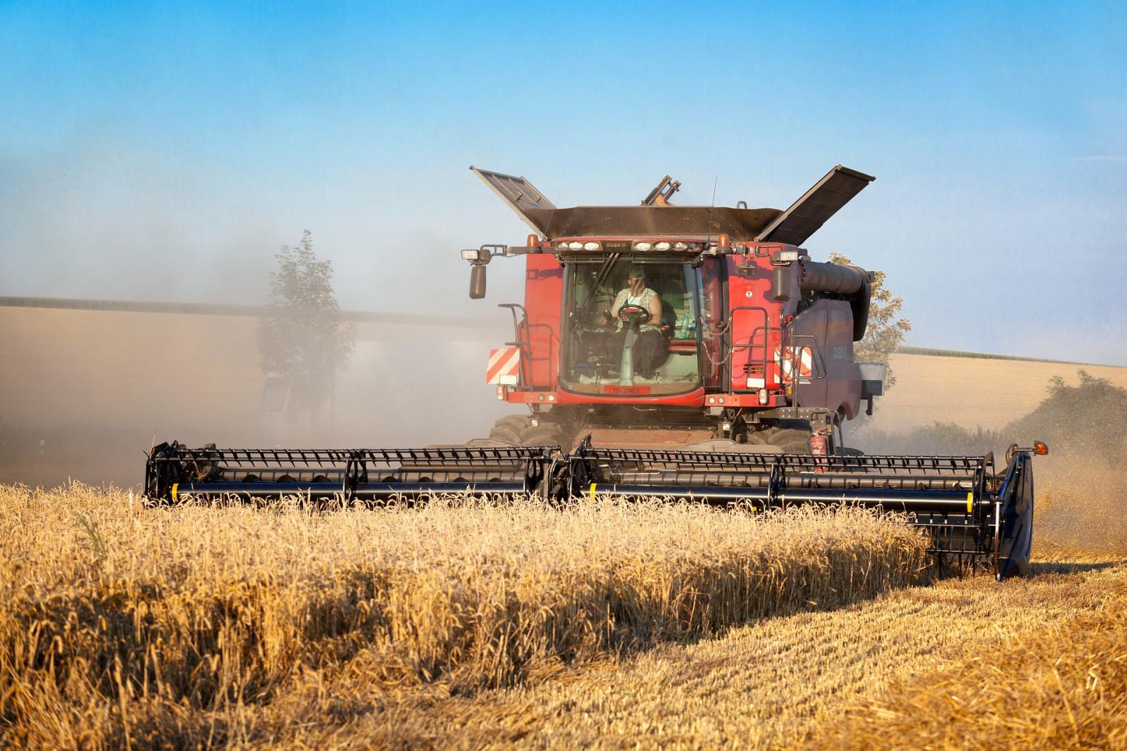 Хозяйства Ленобласти приступили к уборке зерна