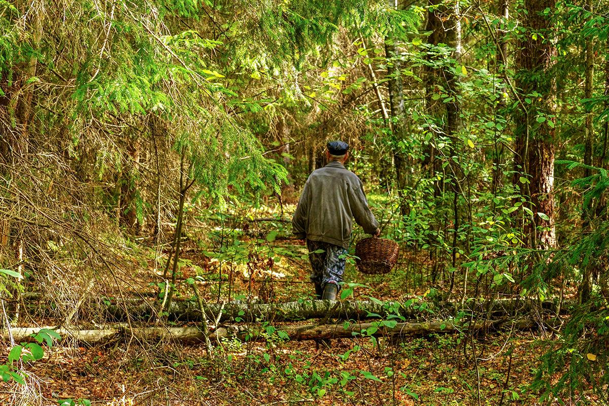Киришского грибника ищут в лесу