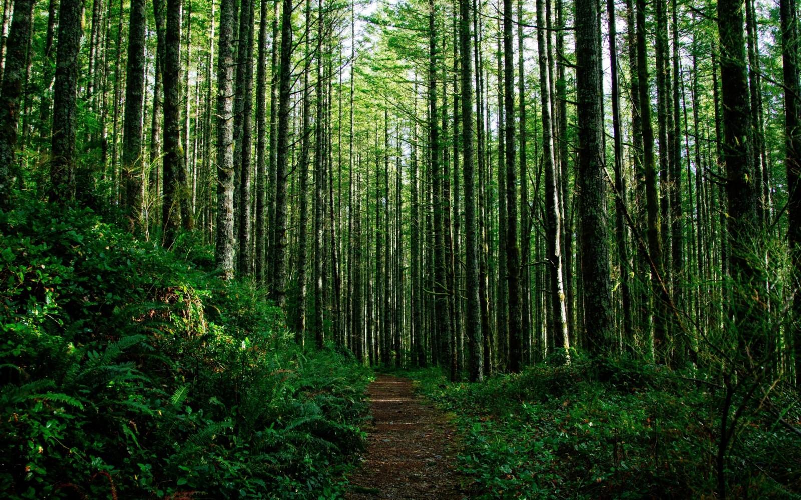 В Ленобласти стартовал осенний лесокультурный сезон