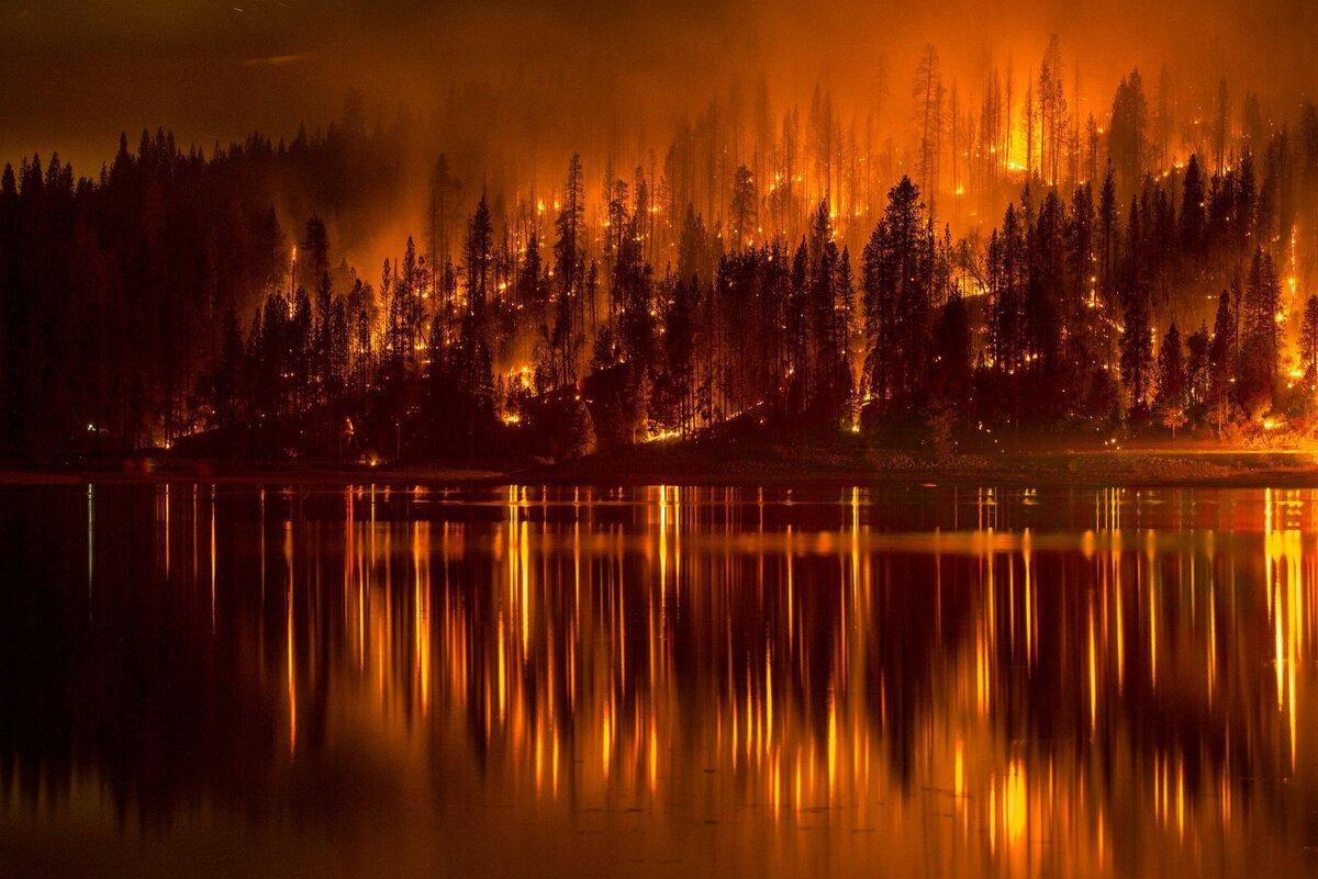 Статистика лесных пожаров 47 региона