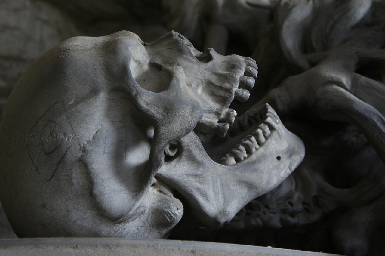В Киришском районе обнаружили человеческие останки