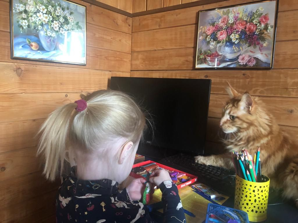 Татьяна Толстова: помогите хоть одному животному найти свой дом!