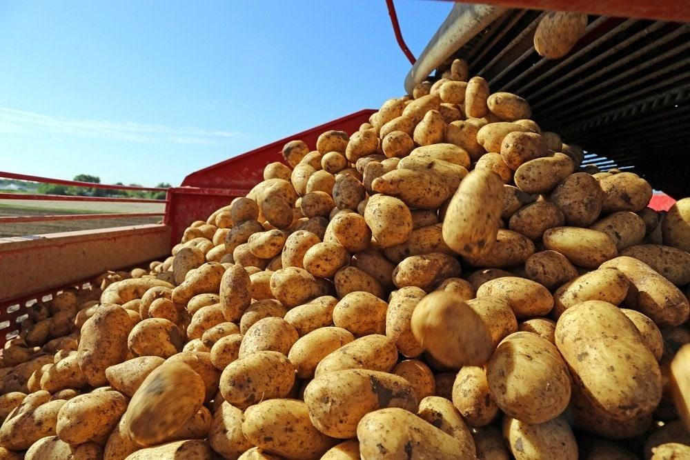 Картошки будет меньше, как и чипсов