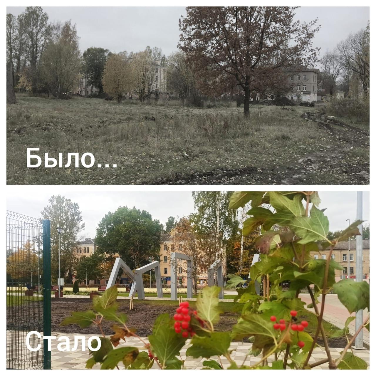 Молодые деревья в парке