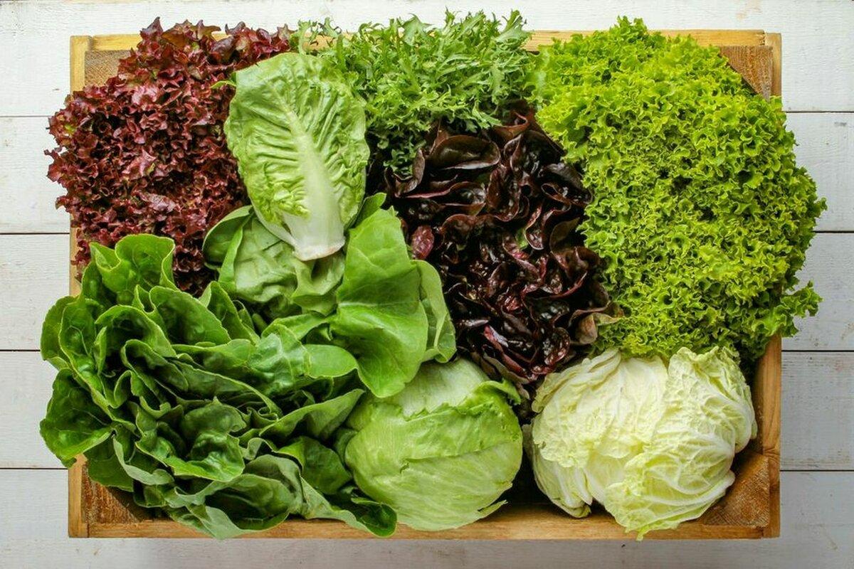 В Ленобласти построят крупнейшее овощное предприятие