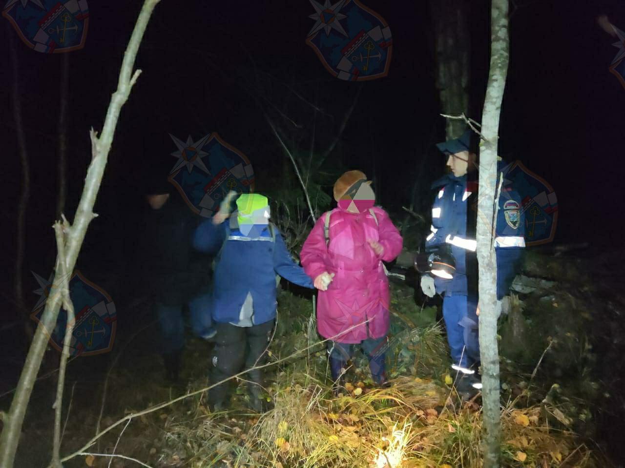 Из Волховского леса вывели троих потеряшек