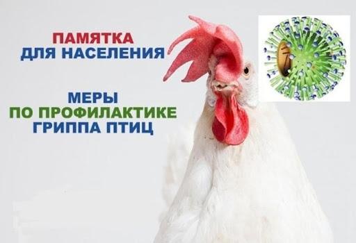 Статья-памятка для населения про Высокопатогенный грипп птиц (ВПГП)! Всем владельцам личных подсобных хозяйств ОСОБОЕ ВНИМАНИЕ!